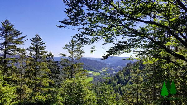 Richtung Titisee