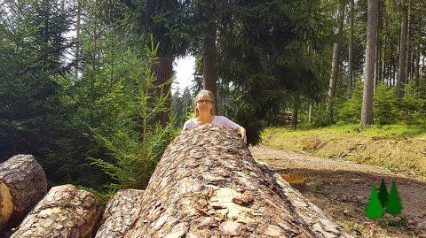 Wald als Heilmittel